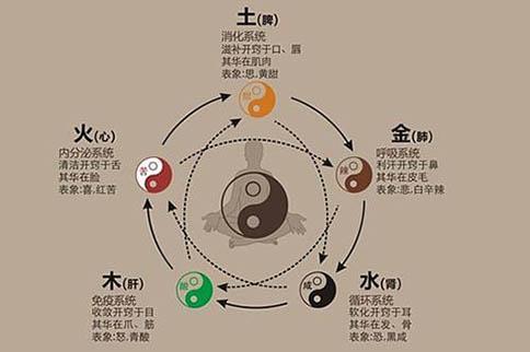 中医学的五行学说